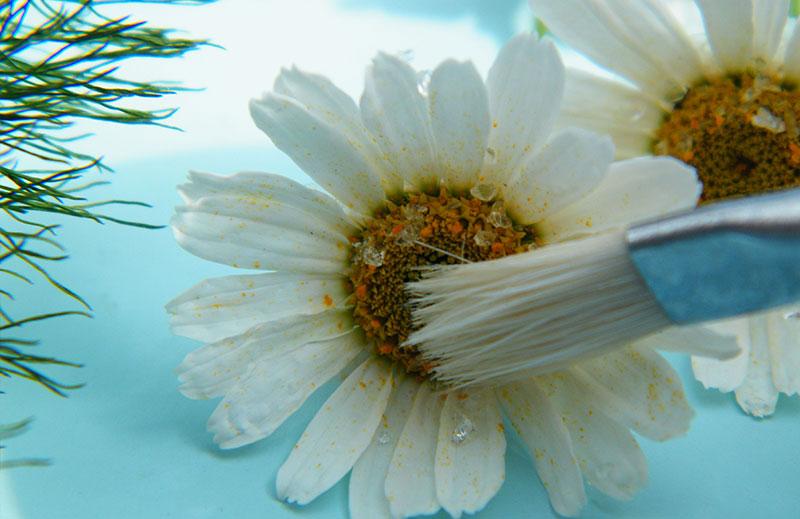 خشک کردن گل های طبیعی
